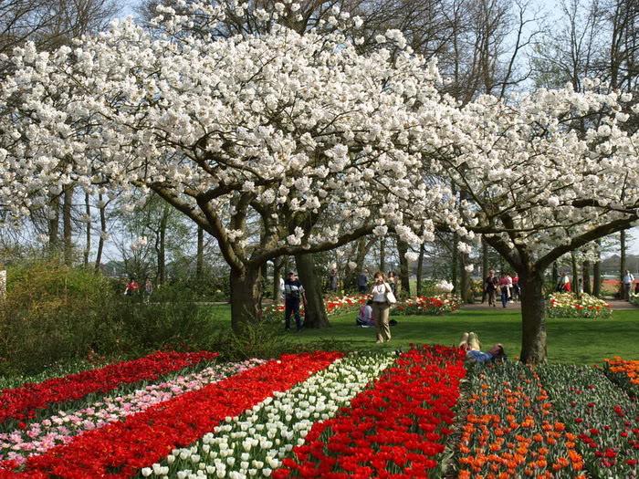 263226,xcitefun anh dep vuon hoa p1 11 Gardens with Beautiful Flowers