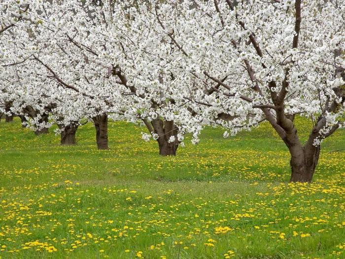 263227,xcitefun anh dep vuon hoa p1 10 Gardens with Beautiful Flowers