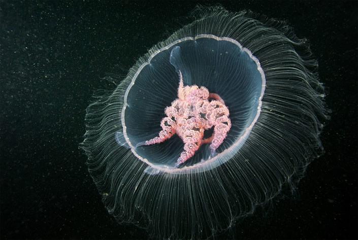 263283xcitefun glowing underwater creatures 5 - Natural Underwater Photograpy