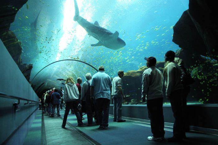 World's Largest Aquarium - Georgia Aquarium Atlanta ...