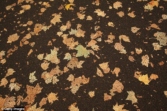 268870xcitefun carpet leaf 4 - Carpet of Leaves - Dramatic Makeover