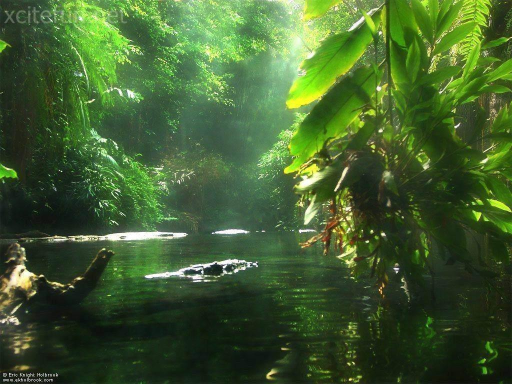 Most beautiful nature wallpapers for Immagini natura gratis