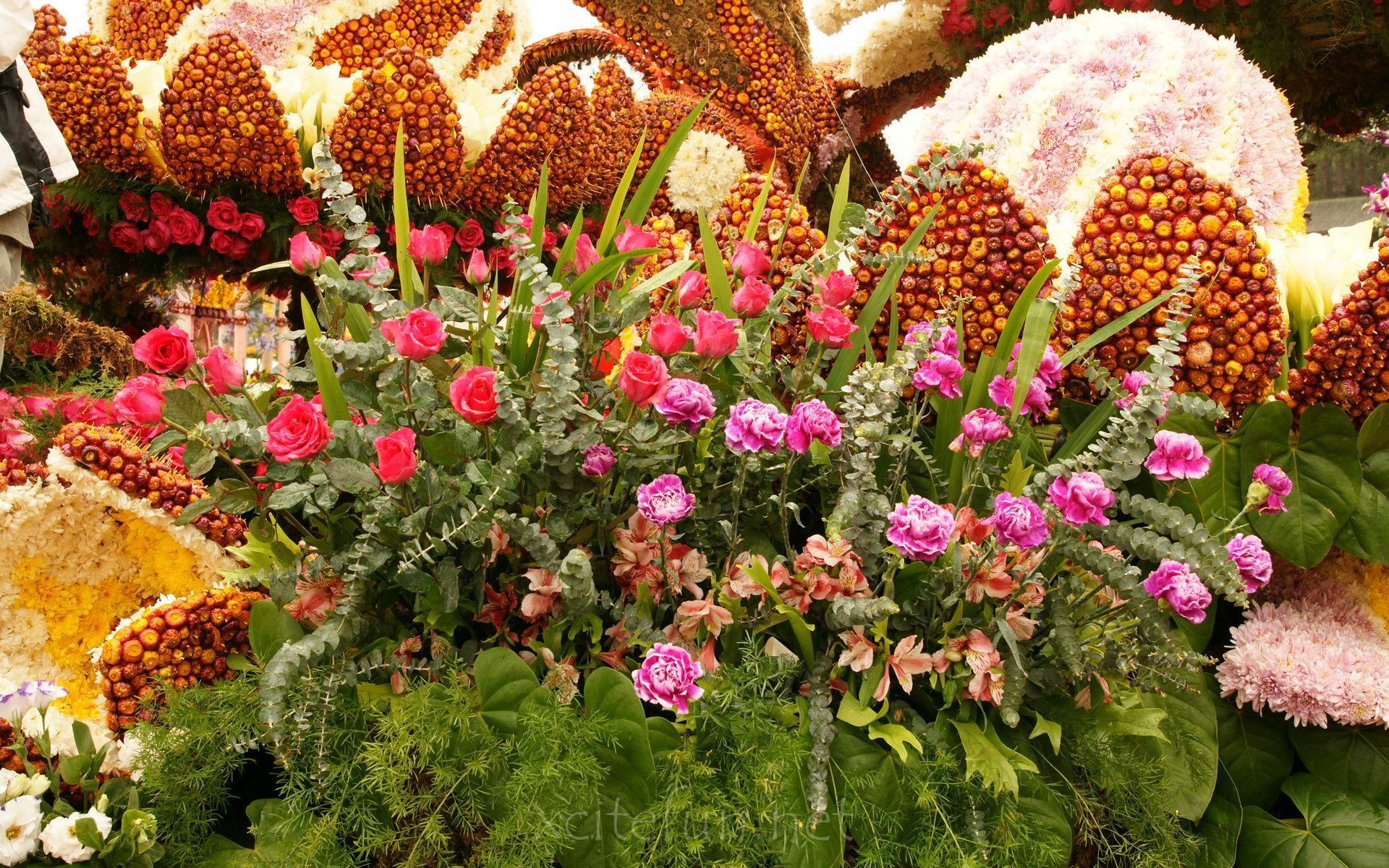 Most Beautiful Flower Wallpapers - XciteFun.net