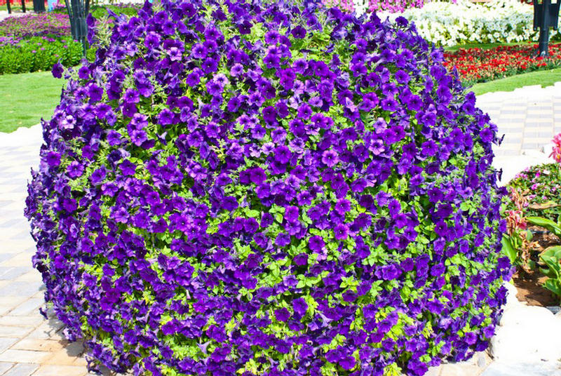 Pictures Of Large Hanging Flower Baskets : Guinness world record a park have large number of