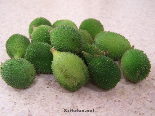 Classification Of Karela Plant