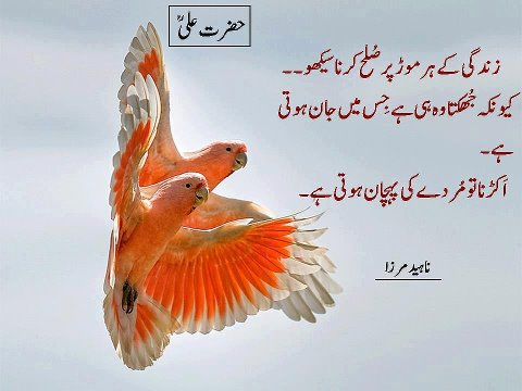 search results islamic urdu quotes wallpapers funny photos kootation ...