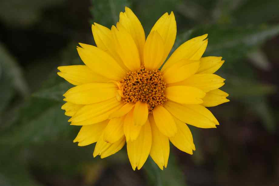 yellow flower pictures - photo #18