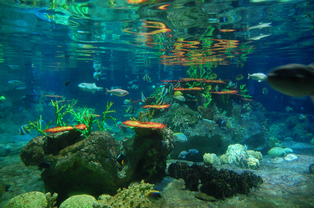 love hong kong love ocean park 0 love it save it best things attractions and activities to do at hong kong disneyland share tweet think of it as a tamer version of ocean park's mine.