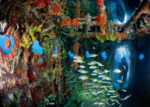 Spectacular Underwater Images Xcitefun Net