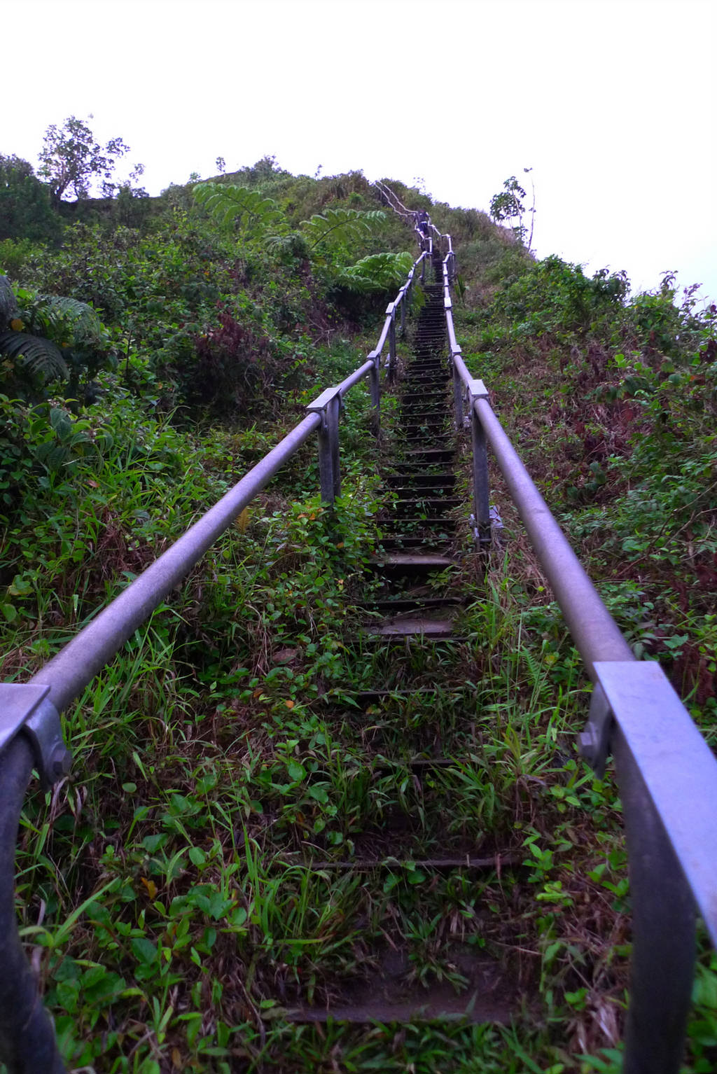 Haiku Stairs Steep Hiking Trail Xcitefun Net