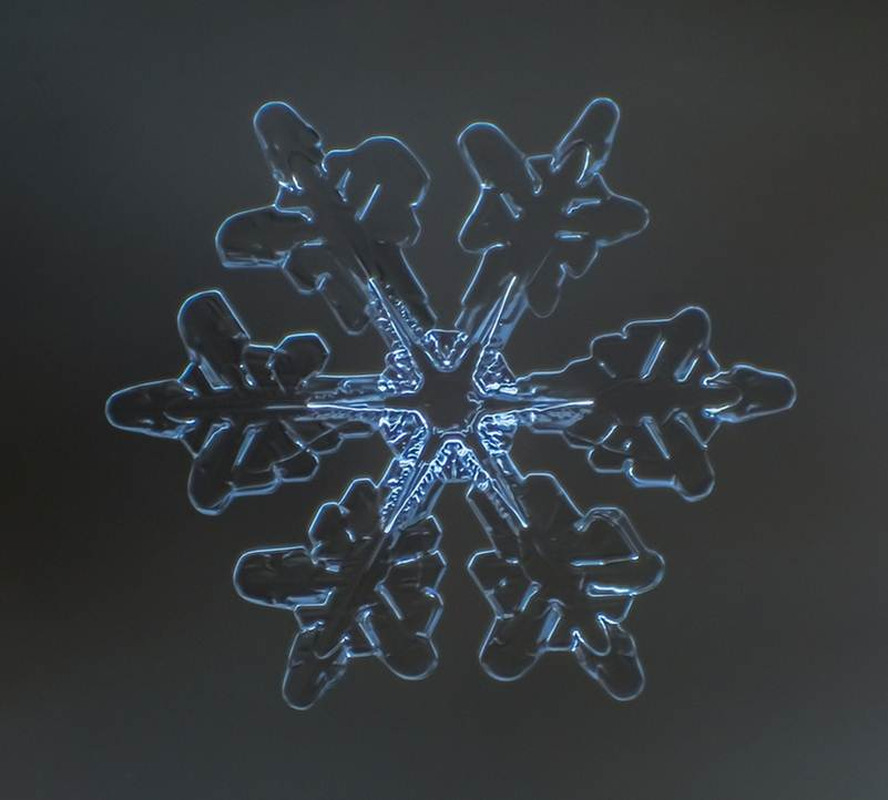 Sparkling Snowflakes Photography