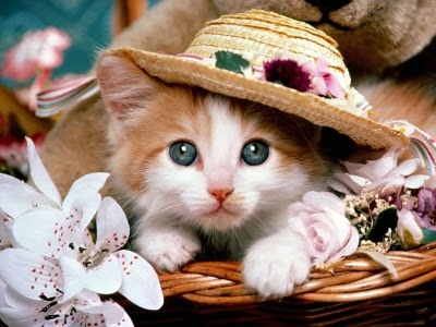 Cute Cats In Style Xcitefun Net