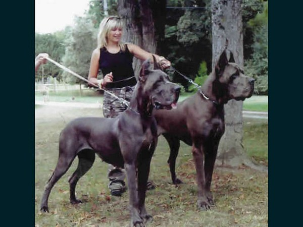 Biggest Dogs In The World