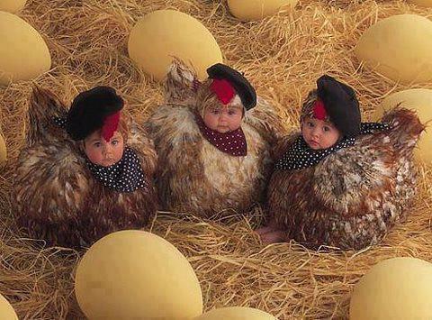 mOdern hens