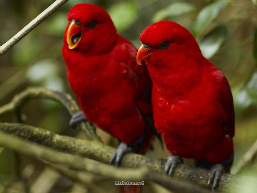 The Most Beautiful Birds