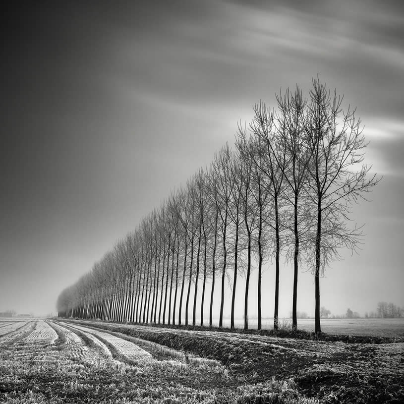 Black And White Autumn Photography
