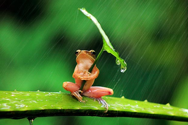 328796xcitefun rainy frogs 1 - Pic Of The Day 2nd January 2014