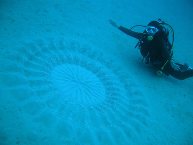 Puffer fish crop circle deep sea beauty for Japanese puffer fish