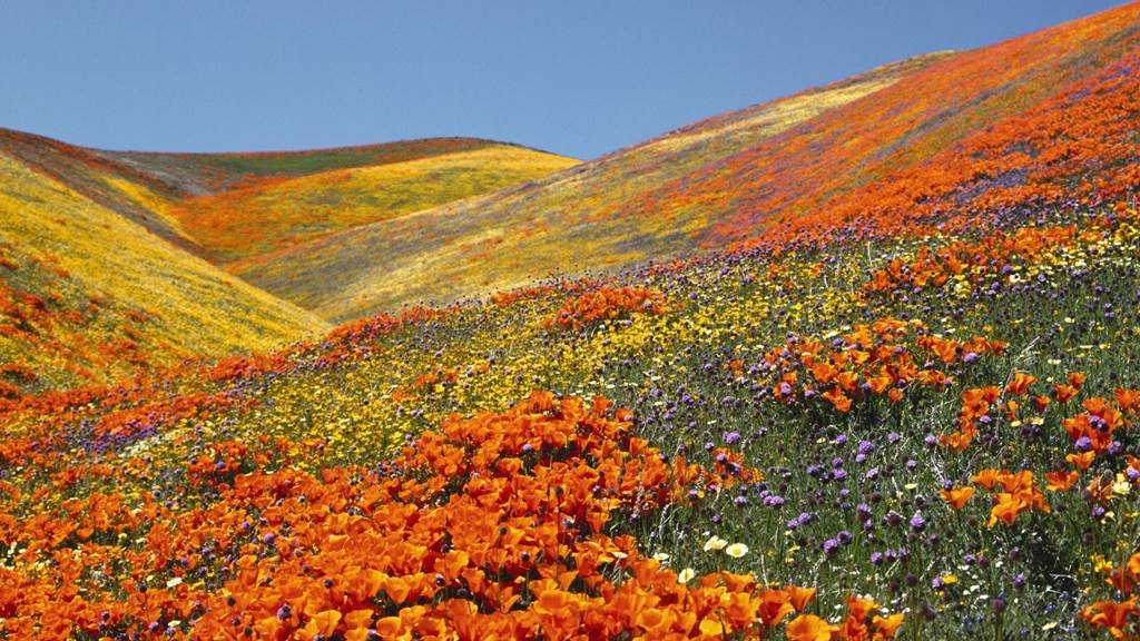 Valley of Flowers National Park India - Images - XciteFun.net
