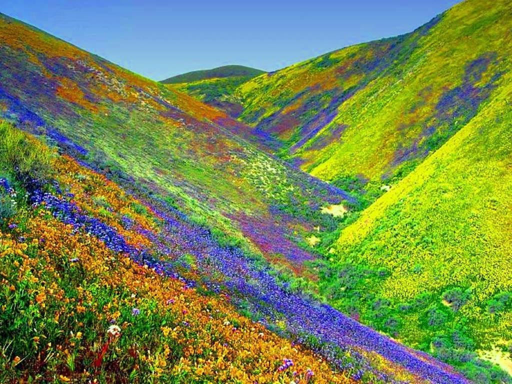 Valley of Flowers National Park India  Images