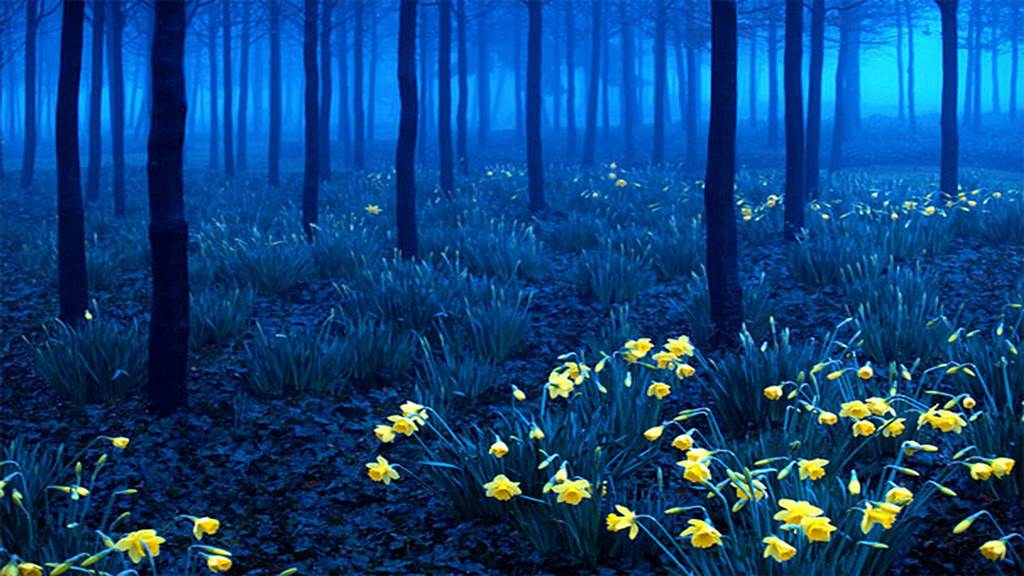 Black Forest Germany Images N Detail