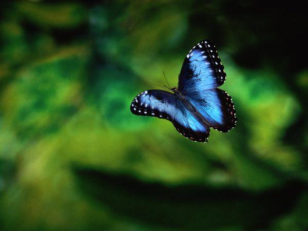 rainforest butterfly wallpaper - photo #7