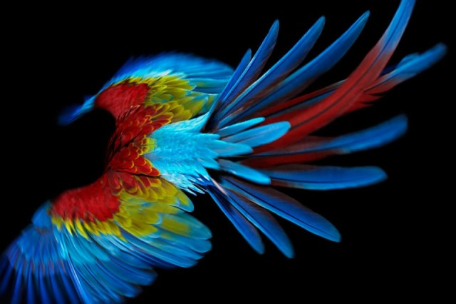 Parrot Photography Colorful Parrot Photography