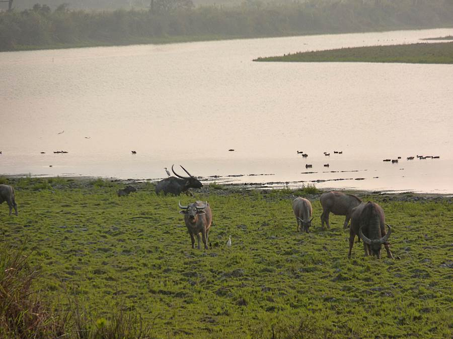 Kaziranga India  City new picture : Kaziranga National Park India Pictorial Visit : Travel Tourism