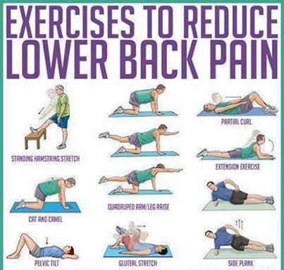 Exercise to Reduce Back Pain - XciteFun net