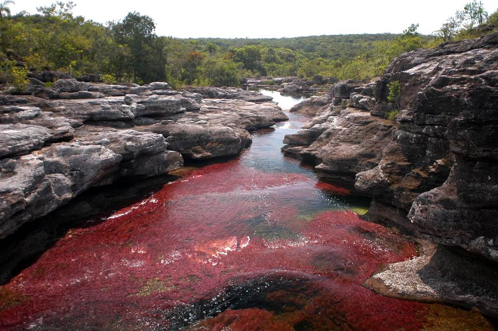 Cano Cristales River Colombia Rainbow River Images T93641