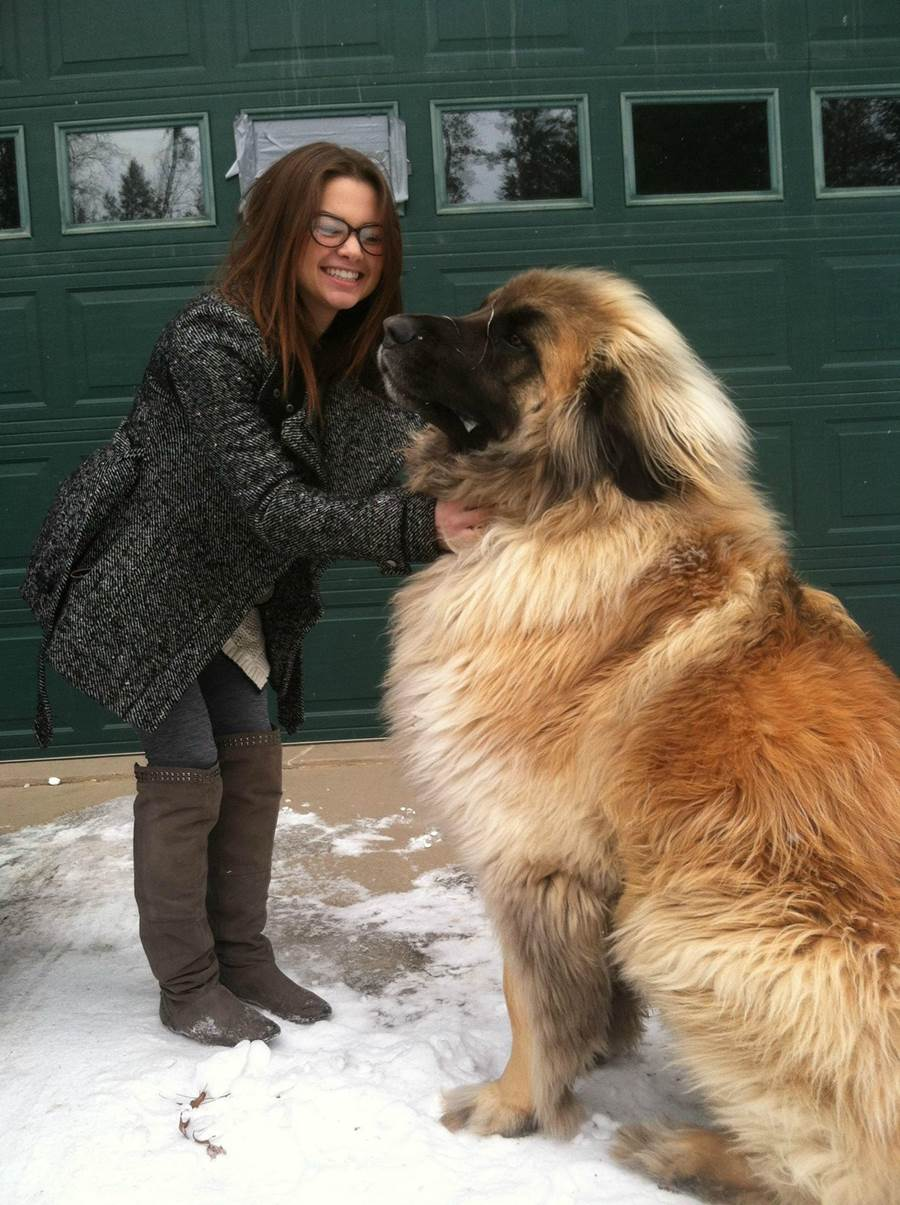 These magnificent dogs can weigh 170 pounds, but are incredibly
