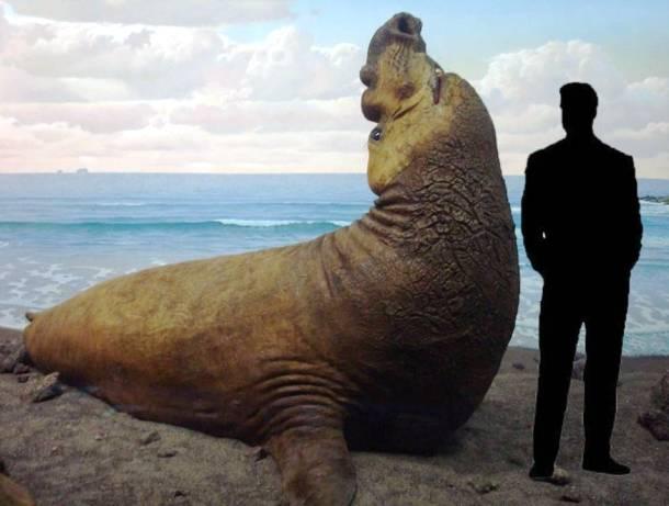 Top 20 Giant Animals Around The World - XciteFun.net