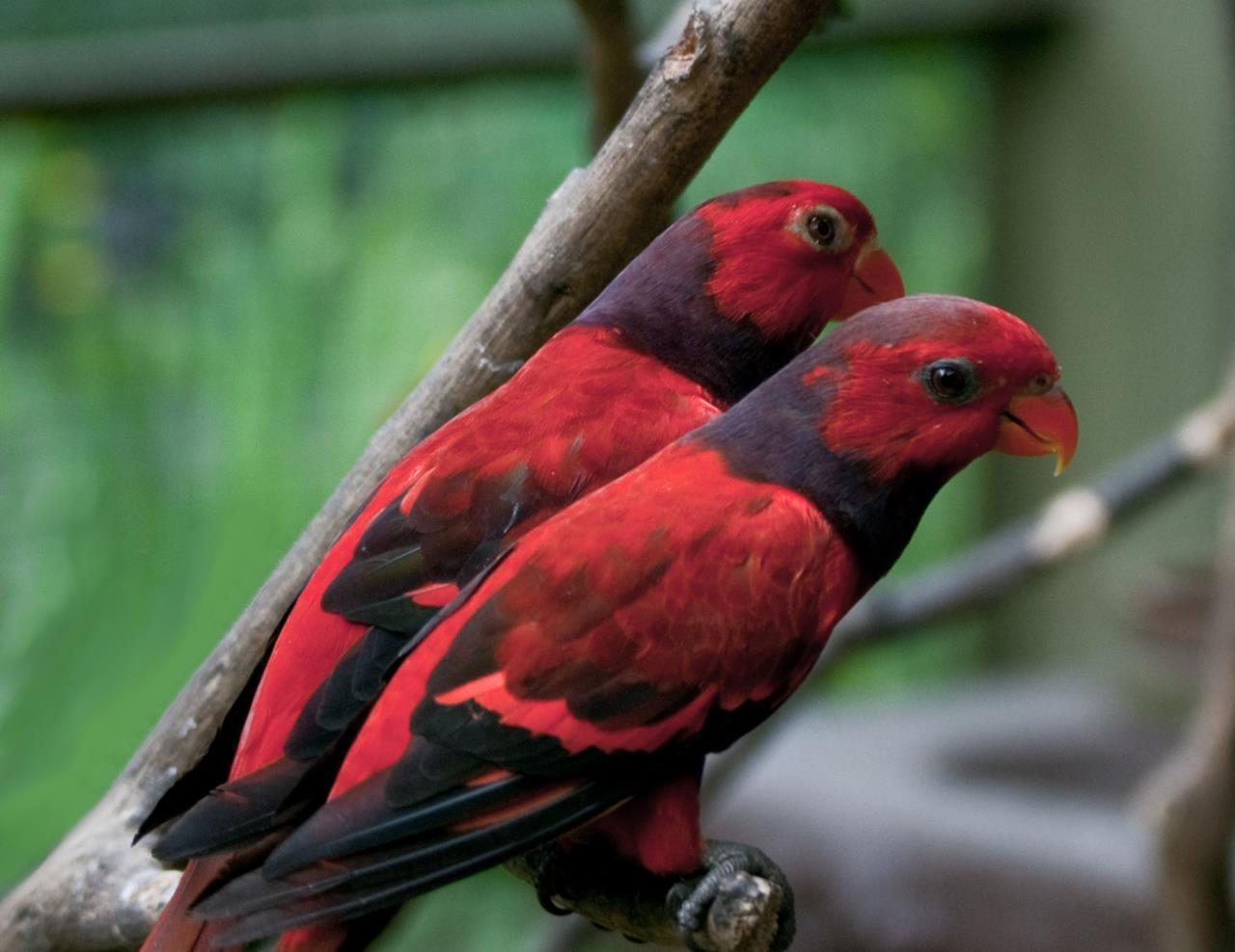 animals, Birds, Macaws Wallpapers HD / Desktop and Mobile