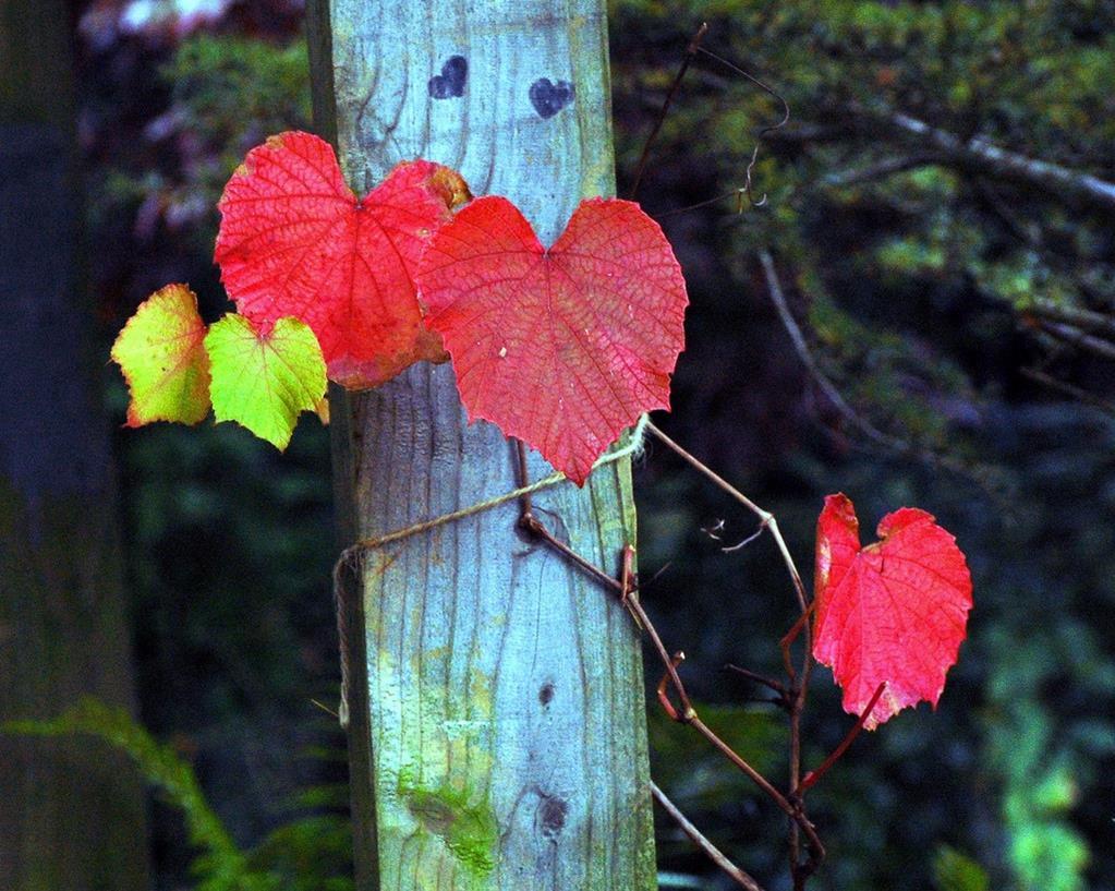 Hearts Found In Nature Xcitefun Net