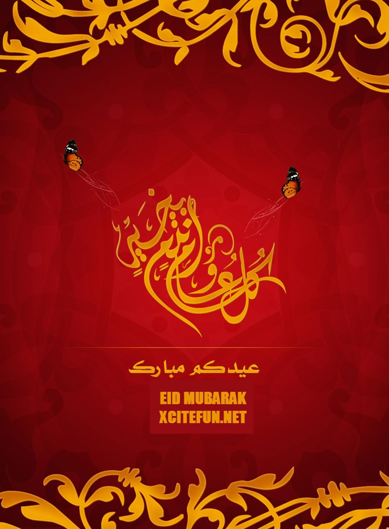 beautiful and stylish eid greetings cards 2014  xcitefun
