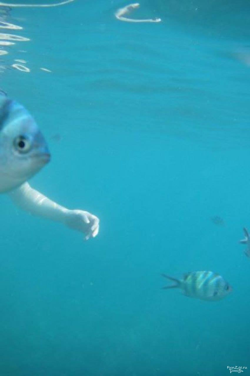 So funny fish photo bomb for Funny fish pictures