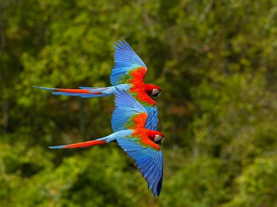Parrots Flying In The Rainforest - XciteFun.net