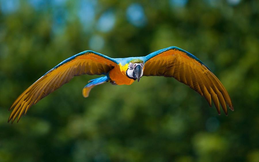 Rainforest Birds Flying Parrots Flying In The ...