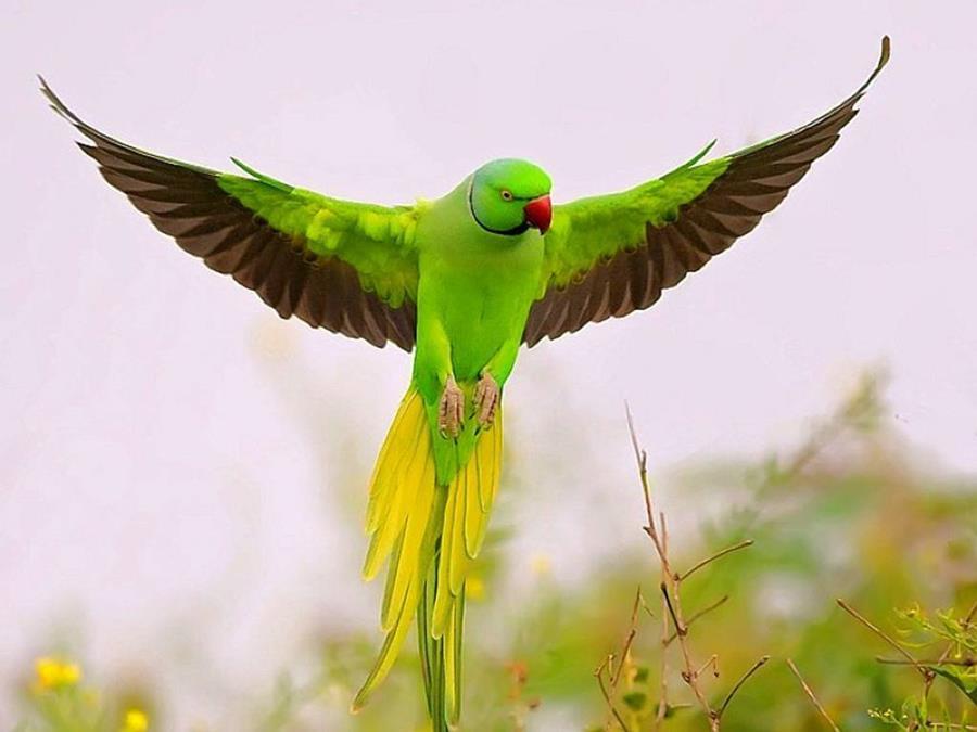 Parrots Flying In The Rainforest Xcitefun Net
