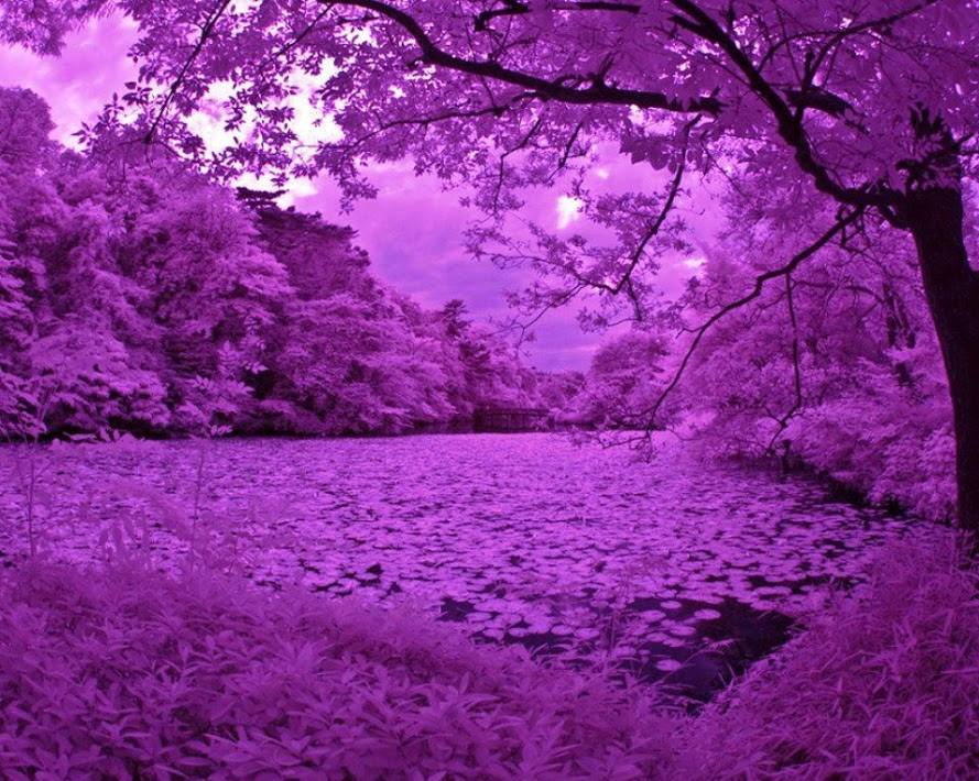purple nature things xcitefun scenery cool pretty colour