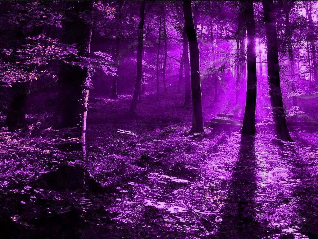 purple nature forest background desktop trees things garden deep xcitefun dark magical backgrounds wallpapers pretty scenery magic landscape woods cute