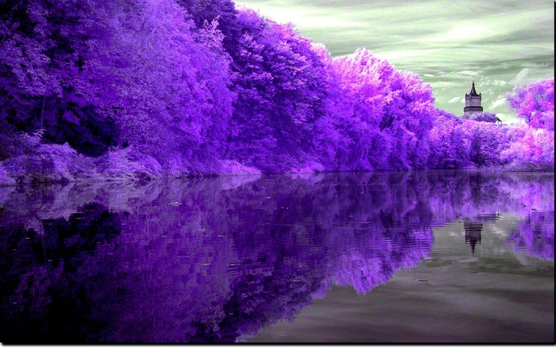 Purple Nature Photography