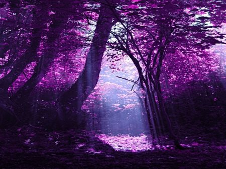 purple nature forest desktop sunlight leaves rain forests backgrounds flowers wallpapers trees things xcitefun mystical nice stuff colors shades