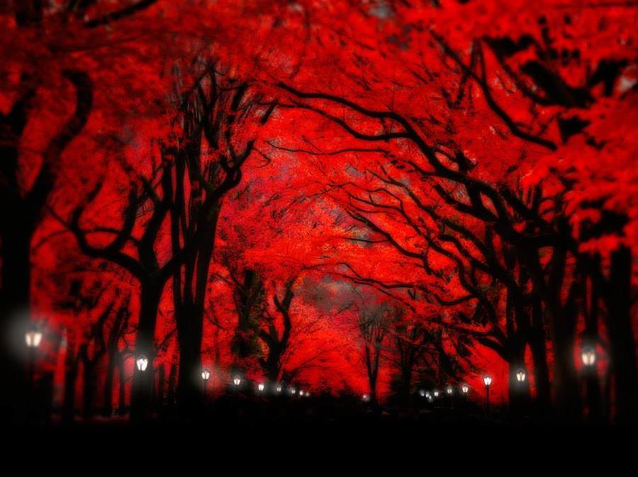 Graphics Of Red Nature Xcitefun Net