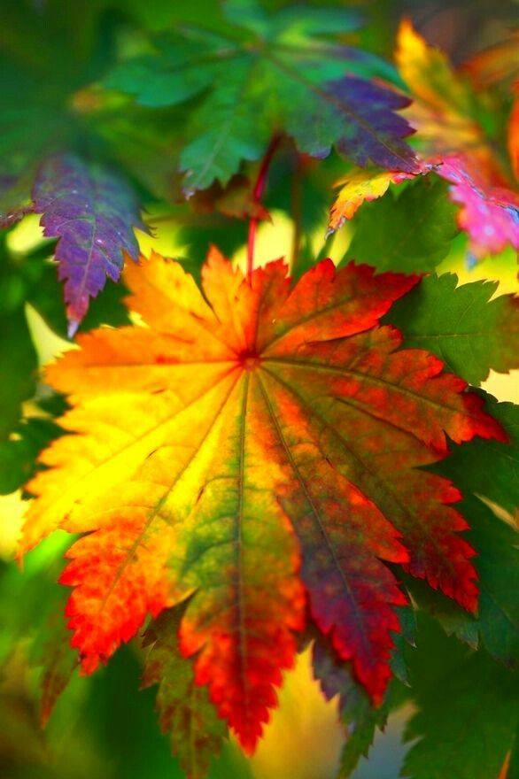 Colorful Leaves Photography - XciteFun.net