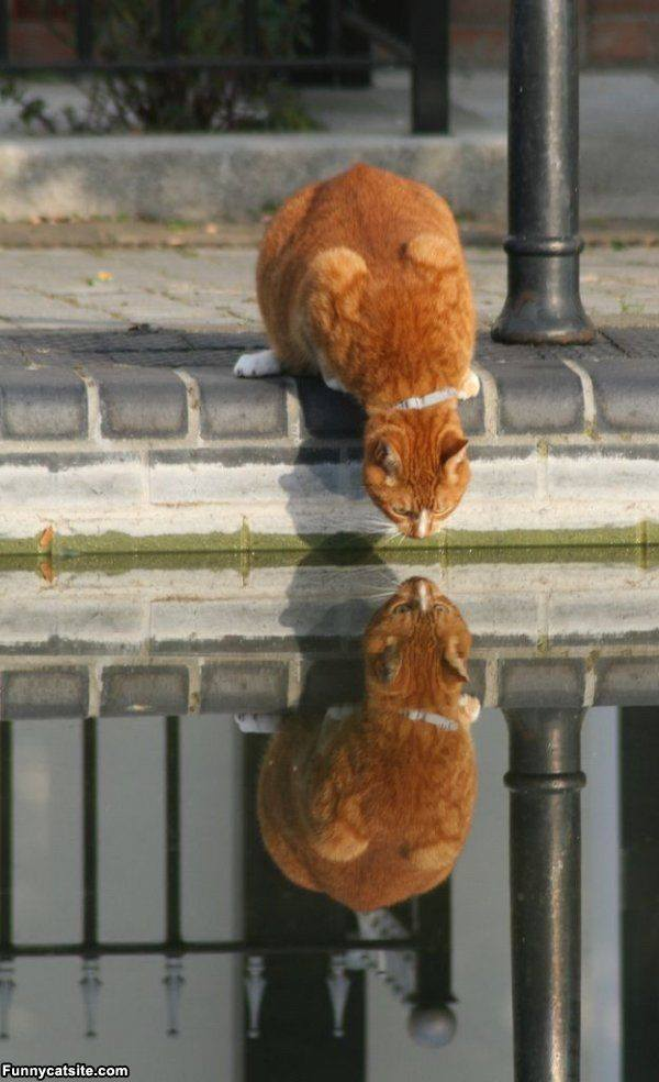 Animals Reflection In The Water Xcitefun Net