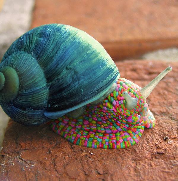 Pictures Of Beautiful Bedrooms And Living Rooms: Images Of Beautiful Snail