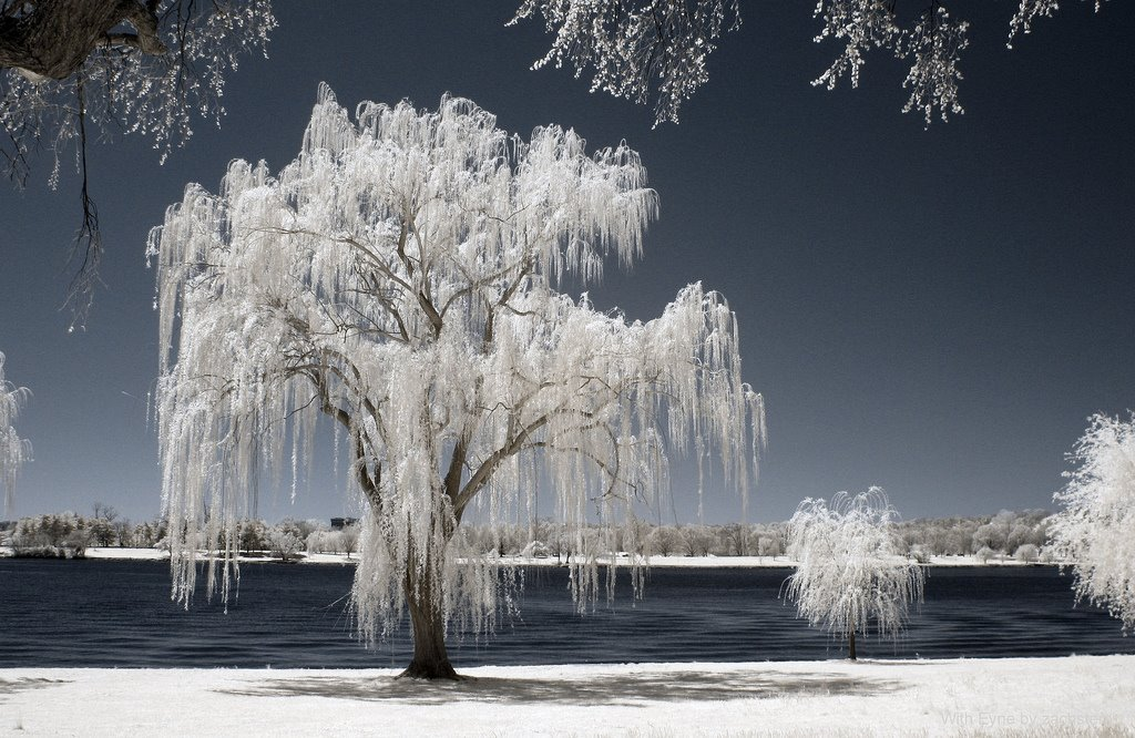 Infrared Photography Of Nature Xcitefun Net