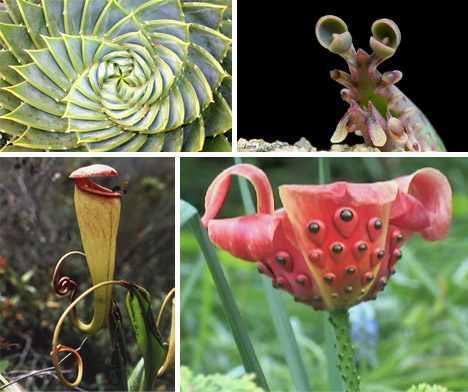 Strange But Beautiful Flowers