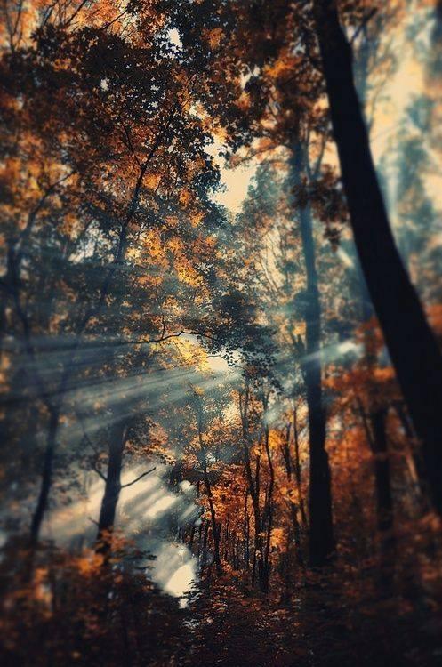 Breathtaking Sun Rays Photography Xcitefun Net